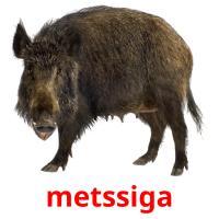 metssiga picture flashcards
