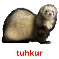 tuhkur picture flashcards