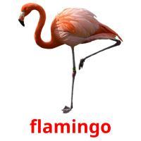flamingo picture flashcards
