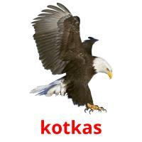 kotkas picture flashcards