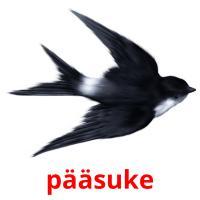 pääsuke picture flashcards