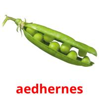 aedhernes picture flashcards