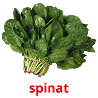 spinat picture flashcards