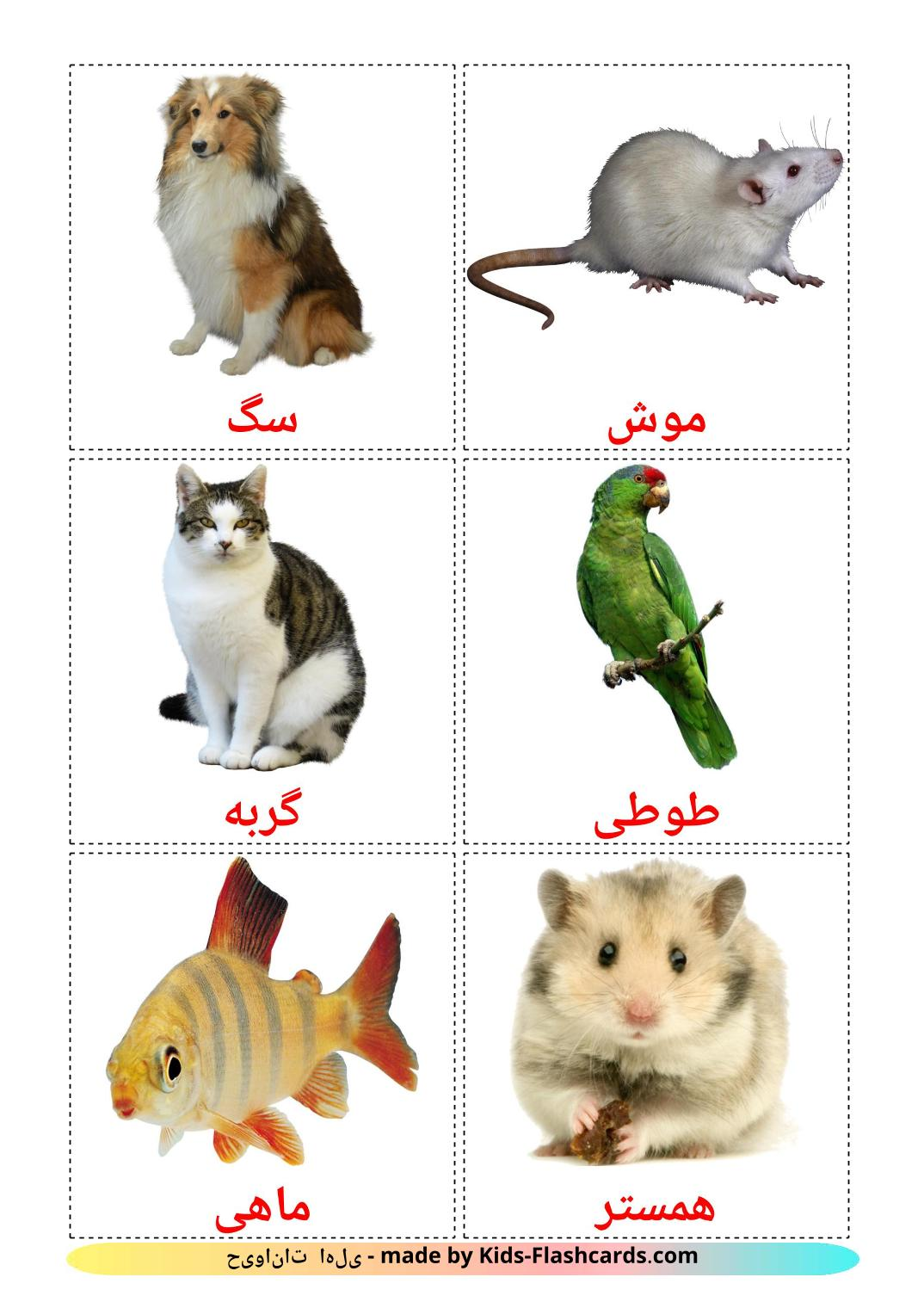 Domestic animals - 10 Free Printable persian Flashcards