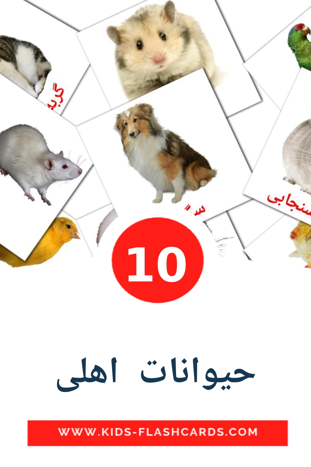 10 حیوانات  اهلی Picture Cards for Kindergarden in persian