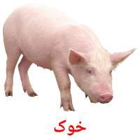 خوک picture flashcards