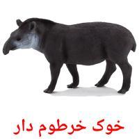 خوک خرطوم دار picture flashcards