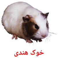 خوک هندی picture flashcards