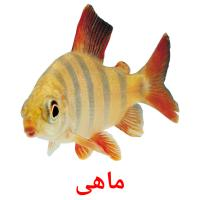 ماهی picture flashcards