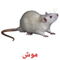 موش picture flashcards