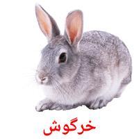 خرگوش picture flashcards