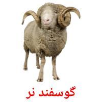 گوسفند نر picture flashcards
