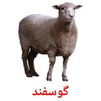 گوسفند picture flashcards