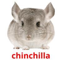 chinchilla picture flashcards