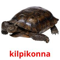 kilpikonna picture flashcards