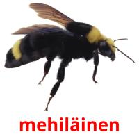 mehiläinen picture flashcards
