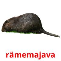 rämemajava picture flashcards