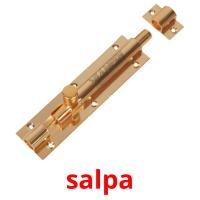 salpa picture flashcards