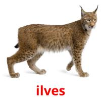 ilves picture flashcards