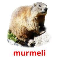 murmeli picture flashcards