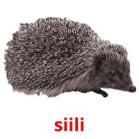 siili picture flashcards