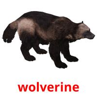 wolverine picture flashcards