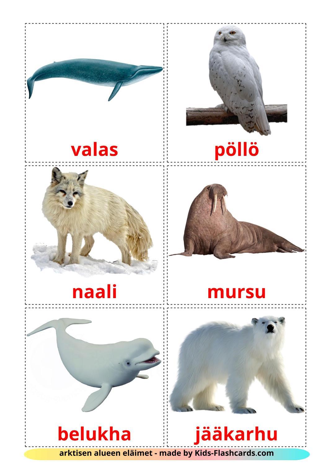 Arctic animals - 14 Free Printable finnish Flashcards