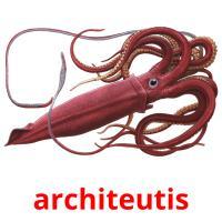 architeutis picture flashcards
