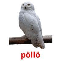 pöllö picture flashcards