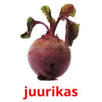juurikas picture flashcards