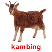 kambing picture flashcards
