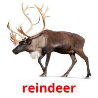 reindeer picture flashcards
