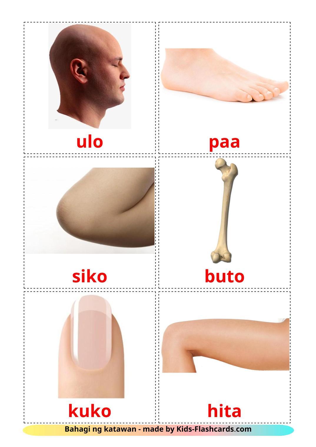 Body Parts - 26 Free Printable filipino Flashcards