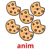 anim picture flashcards