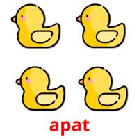 apat picture flashcards