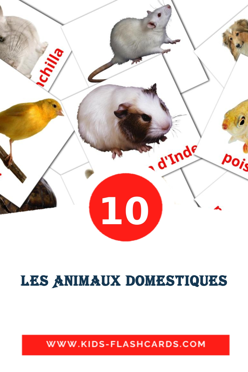 10 Animaux domestiques Picture Cards for Kindergarden in french