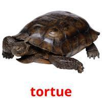 tortue picture flashcards