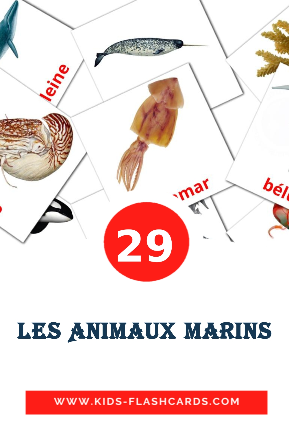 29 Animaux marins Picture Cards for Kindergarden in french