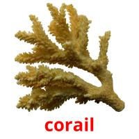corail picture flashcards