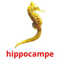 hippocampe picture flashcards