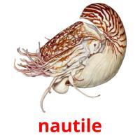 nautile picture flashcards