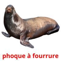 phoque à fourrure picture flashcards