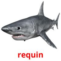 requin picture flashcards