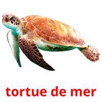 tortue de mer picture flashcards