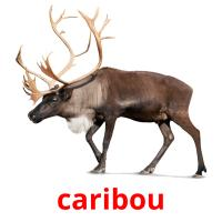 caribou picture flashcards