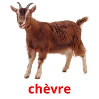 chèvre picture flashcards