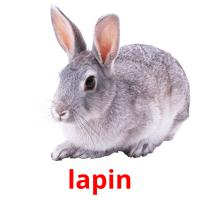 lapin picture flashcards