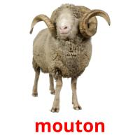 mouton picture flashcards