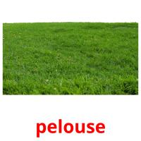 pelouse picture flashcards