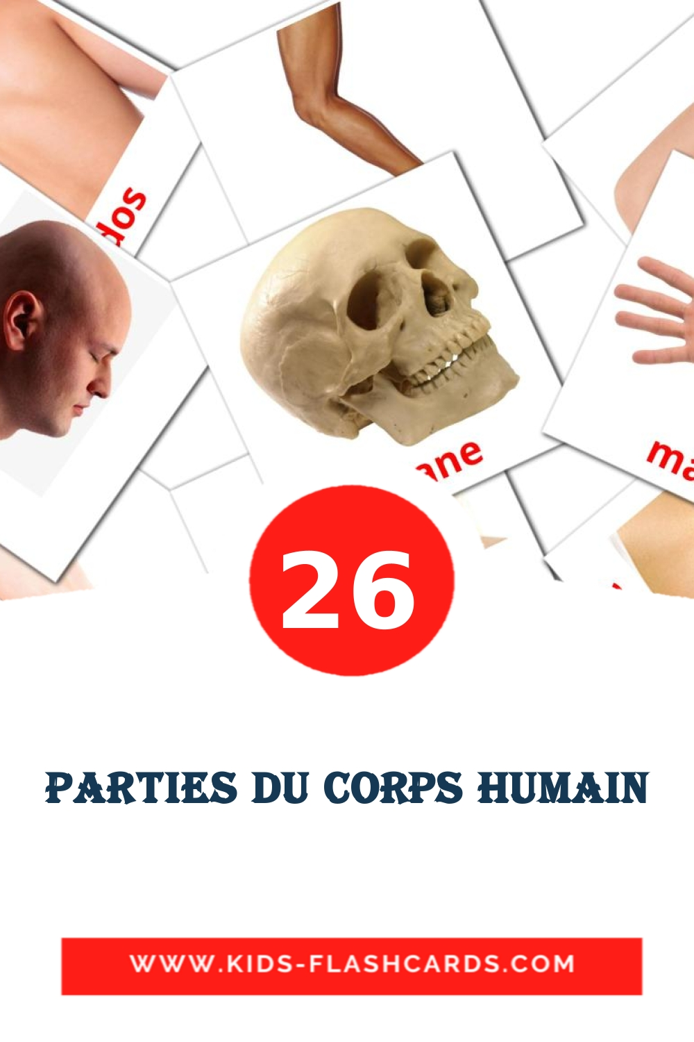 26 Parties du corps Picture Cards for Kindergarden in french